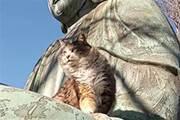 佛像手中闖入一隻貓,畫面很唯美,網友卻評論:掌上名豬!